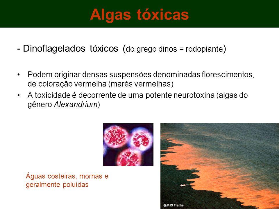 Algas tóxicas - Dinoflagelados tóxicos (do grego dinos = rodopiante)