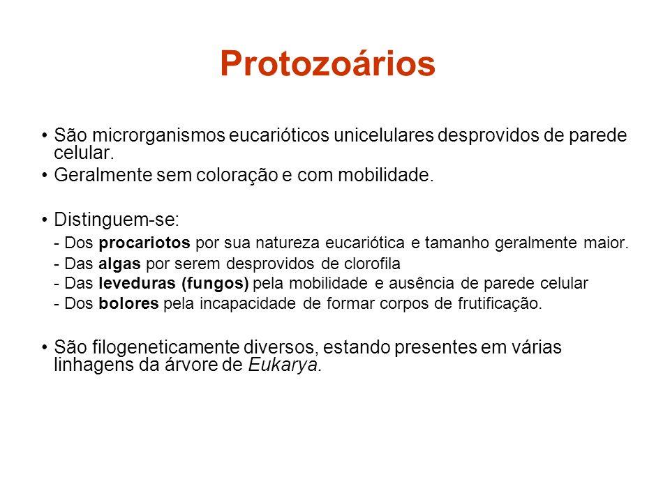 Protozoários São microrganismos eucarióticos unicelulares desprovidos de parede celular. Geralmente sem coloração e com mobilidade.