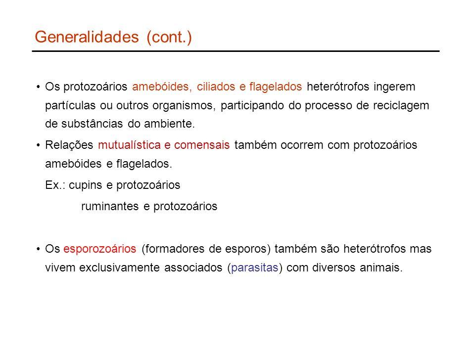 Generalidades (cont.)