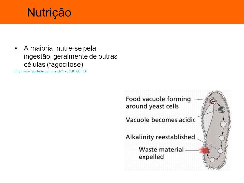 Nutrição A maioria nutre-se pela ingestão, geralmente de outras células (fagocitose) http://www.youtube.com/watch v=qJbKhGJFIG4.