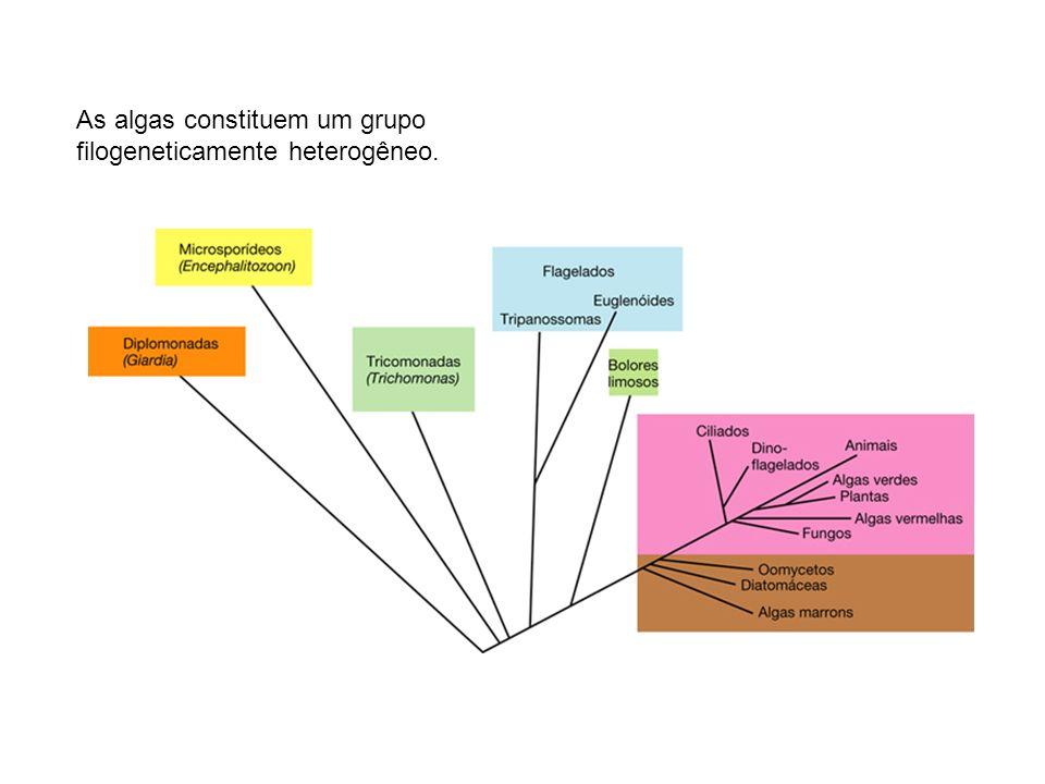 As algas constituem um grupo filogeneticamente heterogêneo.