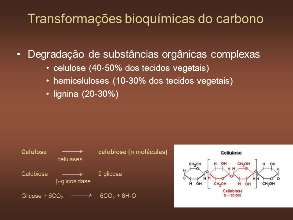 Transformações bioquímicas do carbono