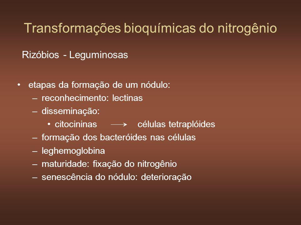 Transformações bioquímicas do nitrogênio