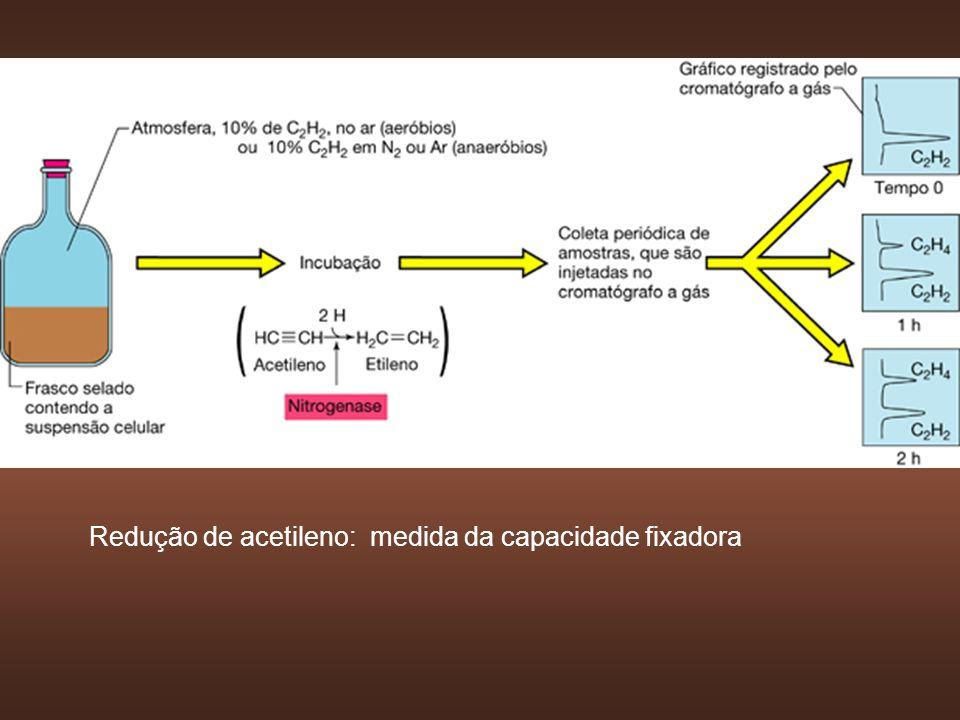 Redução de acetileno: medida da capacidade fixadora