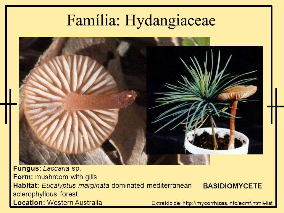 Família: Hydangiaceae