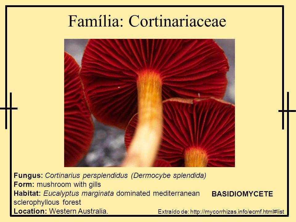 Família: Cortinariaceae