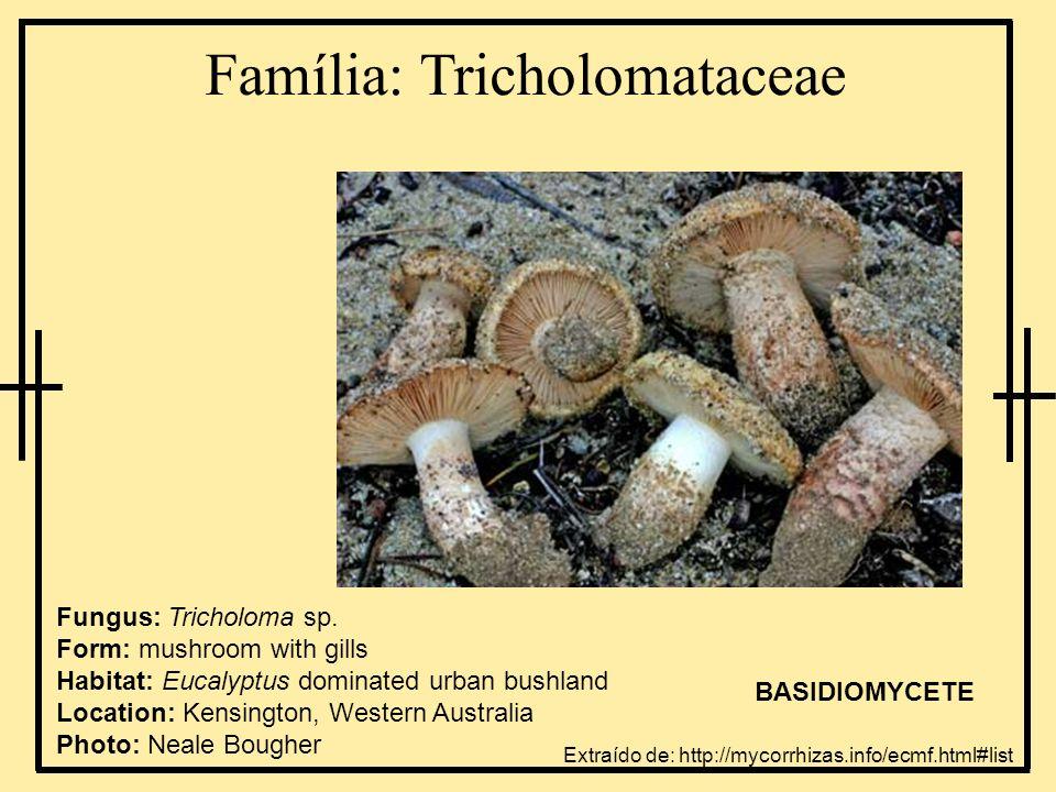 Família: Tricholomataceae