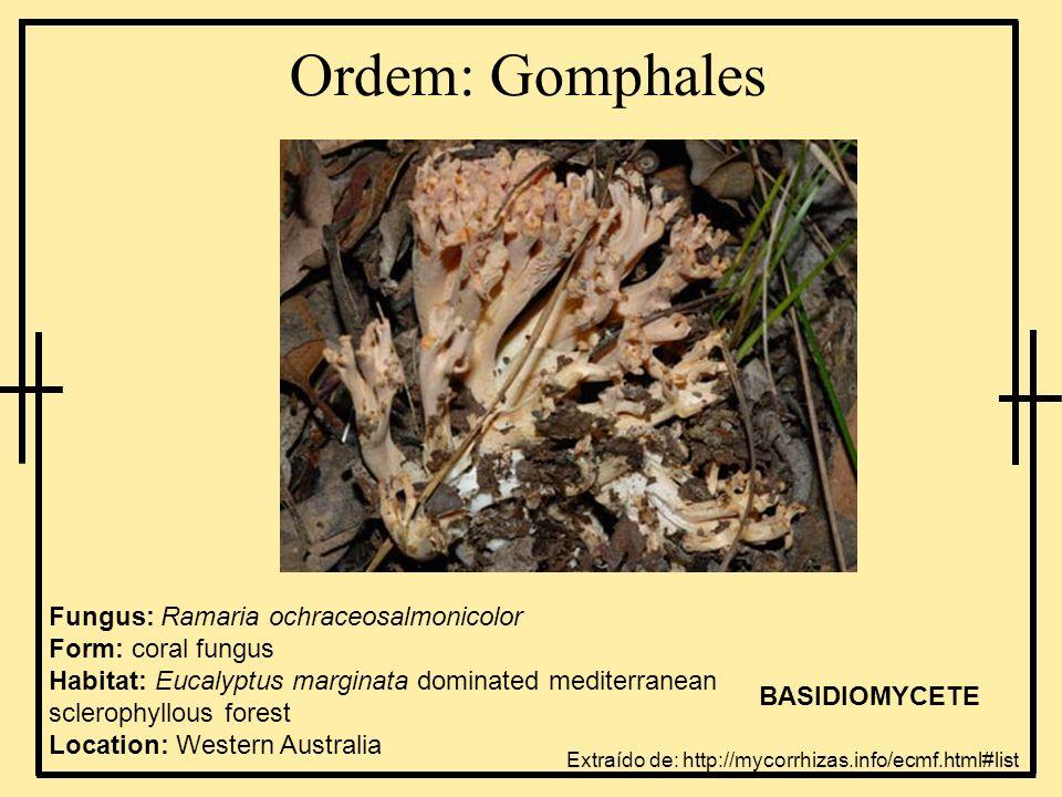 Ordem: Gomphales
