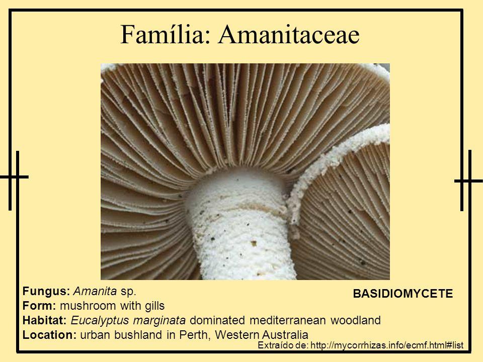 Família: Amanitaceae