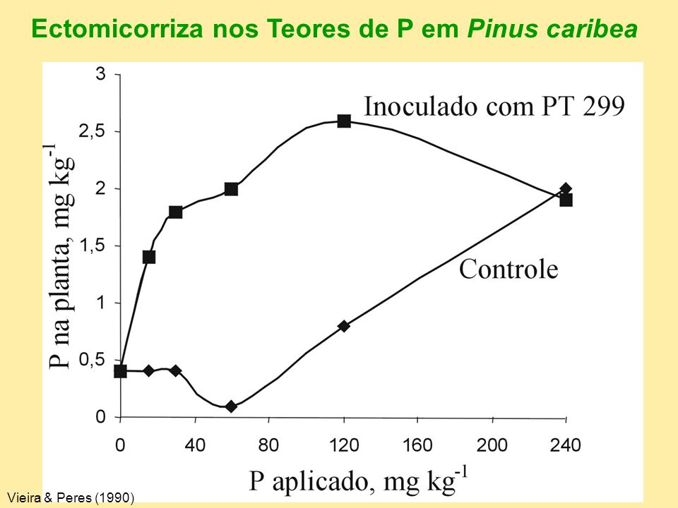 Ectomicorriza nos Teores de P em Pinus caribea