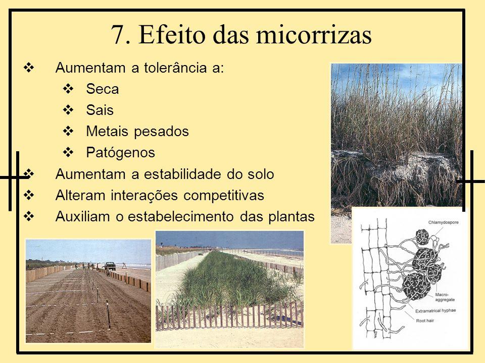 7. Efeito das micorrizas Aumentam a tolerância a: Seca Sais