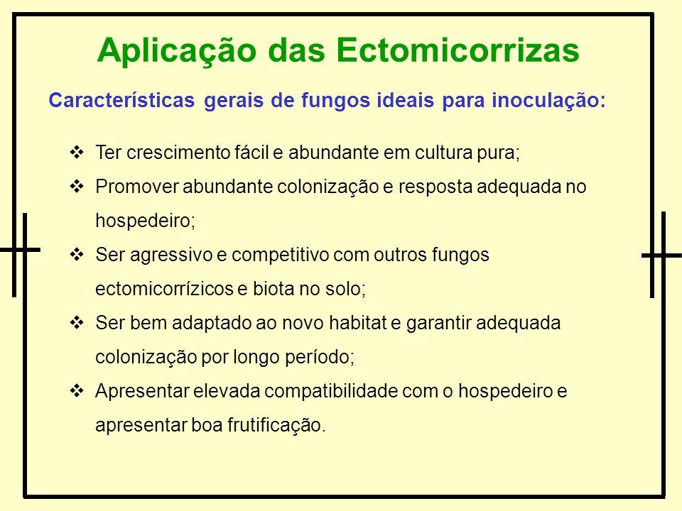 Aplicação das Ectomicorrizas