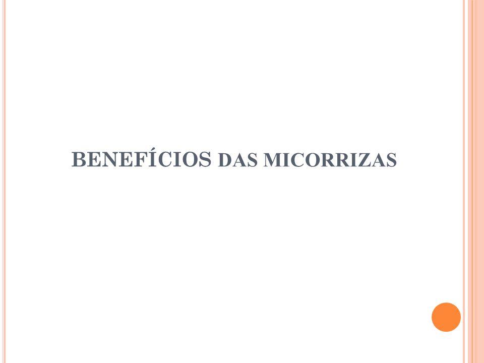 BENEFÍCIOS DAS MICORRIZAS