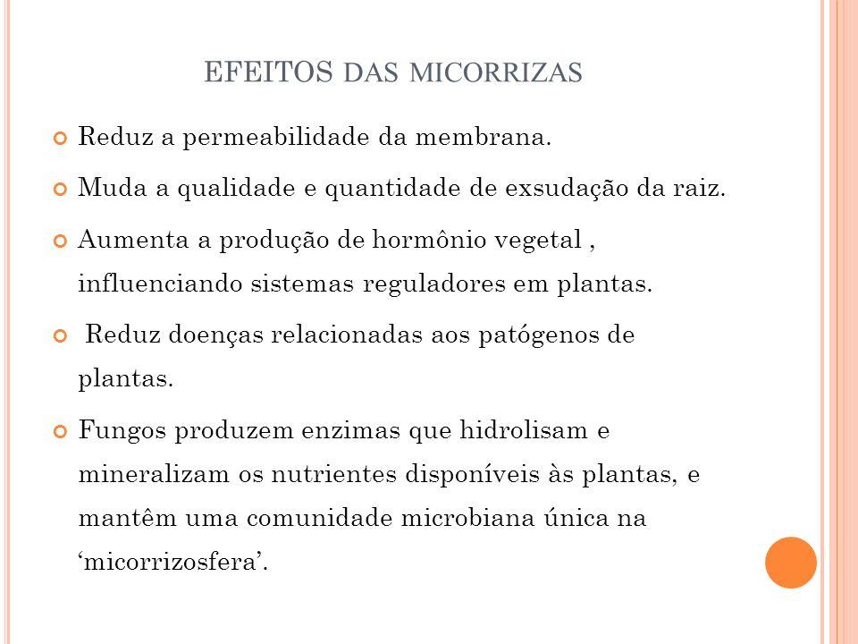 efeitos das micorrizas