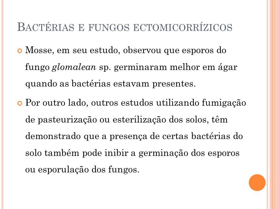 Bactérias e fungos ectomicorrízicos