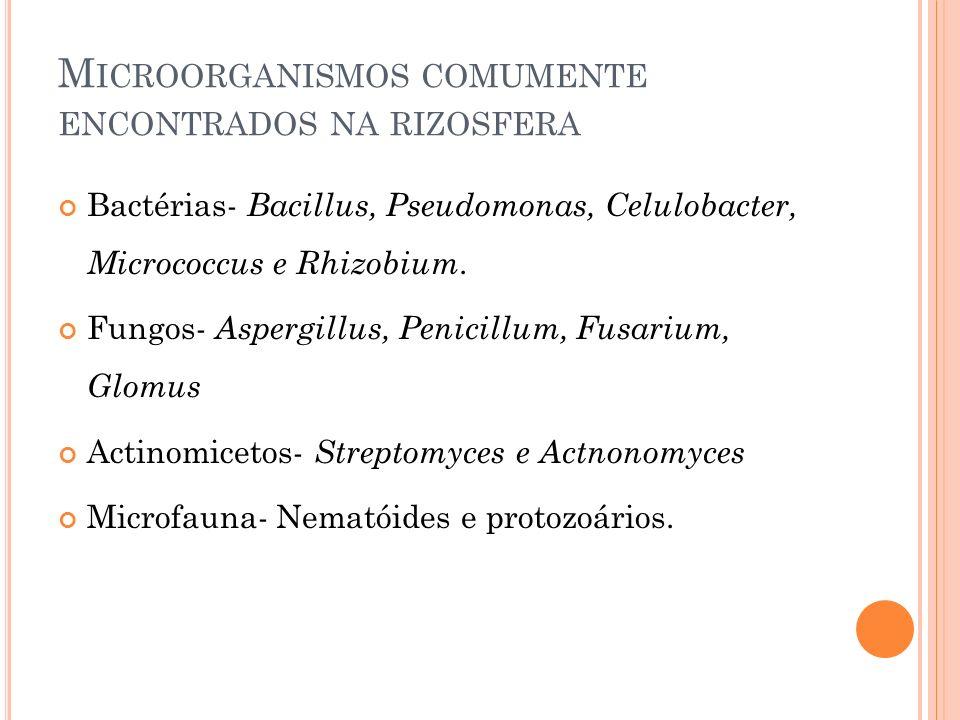 Microorganismos comumente encontrados na rizosfera
