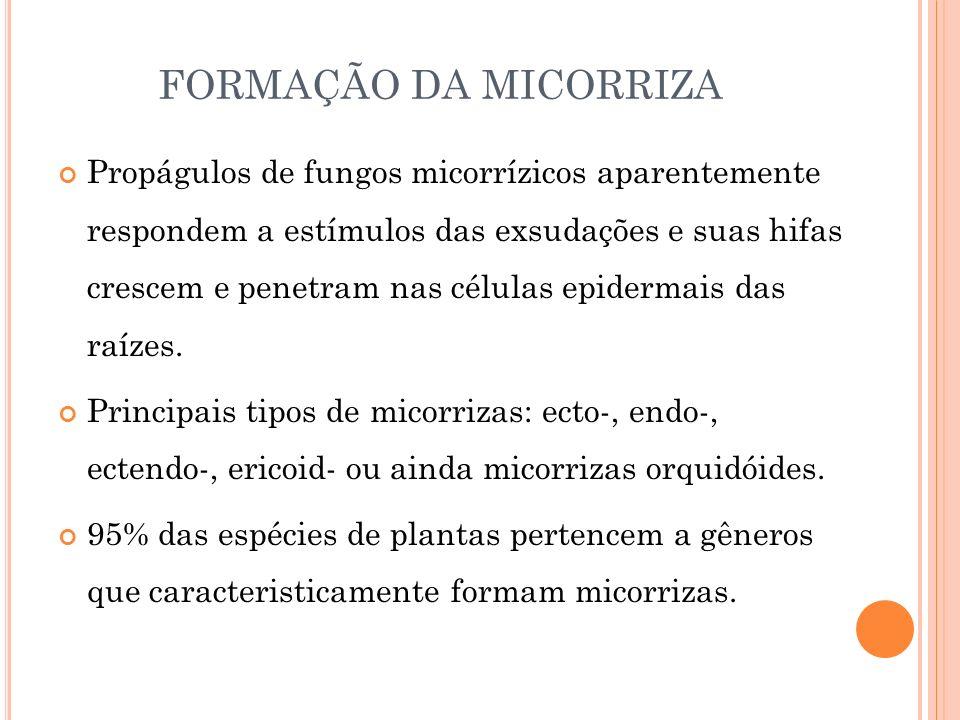 FORMAÇÃO DA MICORRIZA