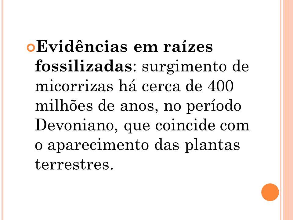 Evidências em raízes fossilizadas: surgimento de micorrizas há cerca de 400 milhões de anos, no período Devoniano, que coincide com o aparecimento das plantas terrestres.