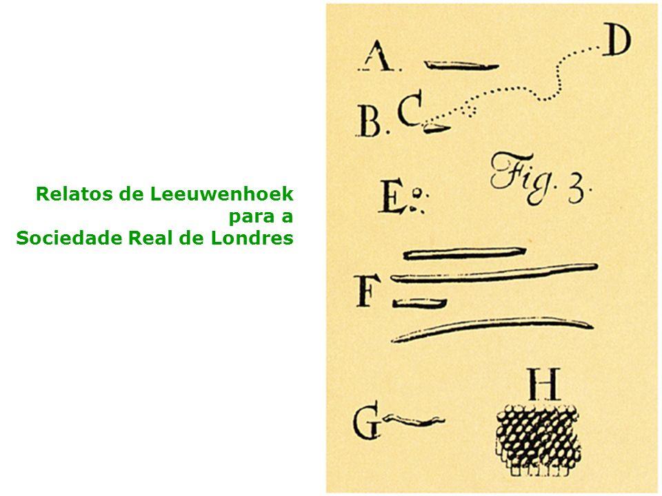 Relatos de Leeuwenhoek