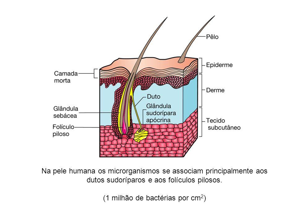 Na pele humana os microrganismos se associam principalmente aos