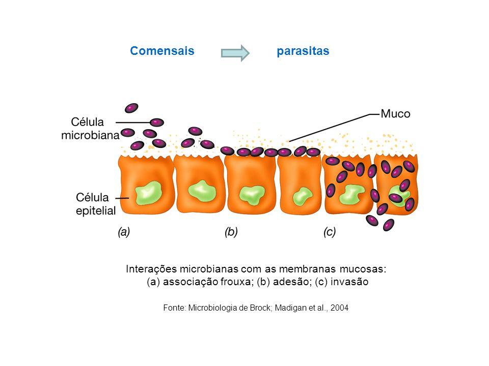 Comensais parasitas Interações microbianas com as membranas mucosas: