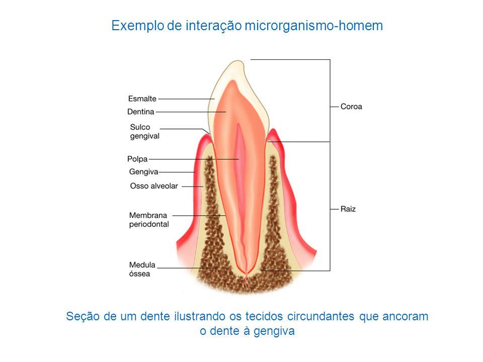 Exemplo de interação microrganismo-homem