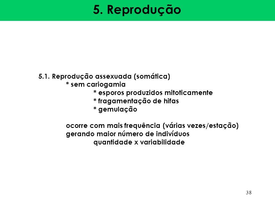 5. Reprodução 5.1. Reprodução assexuada (somática) * sem cariogamia