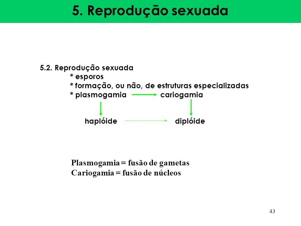 5. Reprodução sexuada Plasmogamia = fusão de gametas
