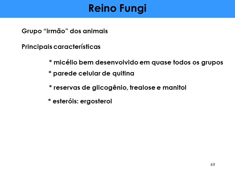 Reino Fungi Grupo irmão dos animais Principais características