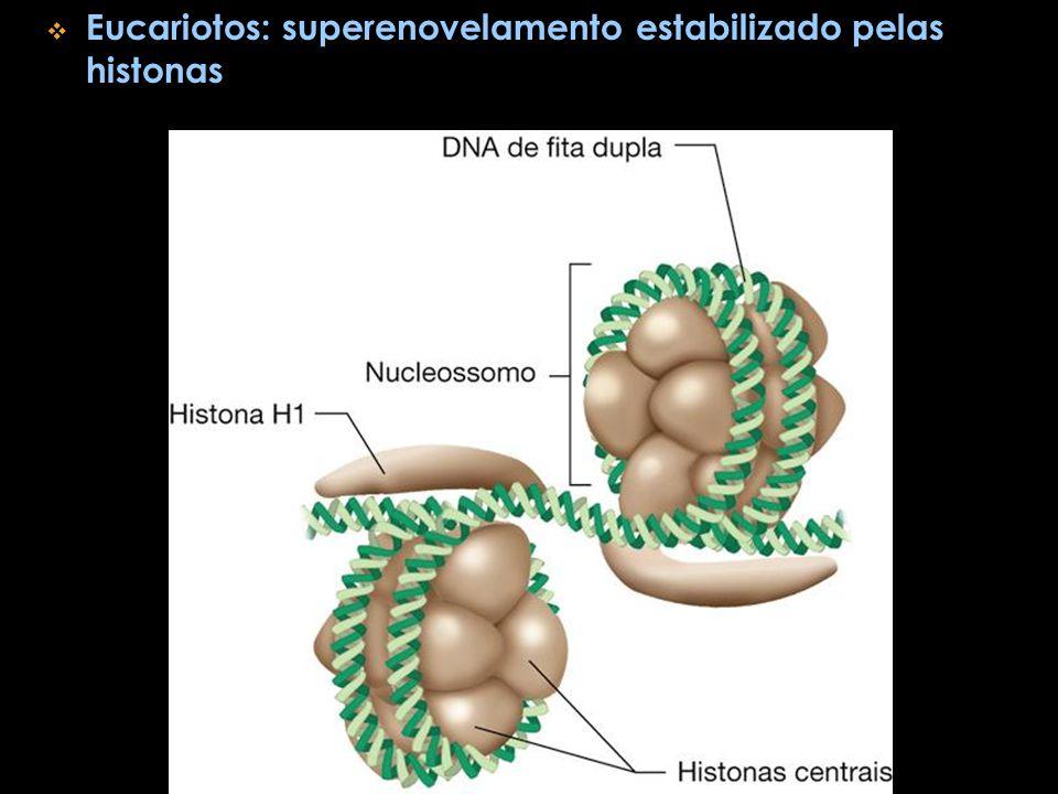 Eucariotos: superenovelamento estabilizado pelas histonas