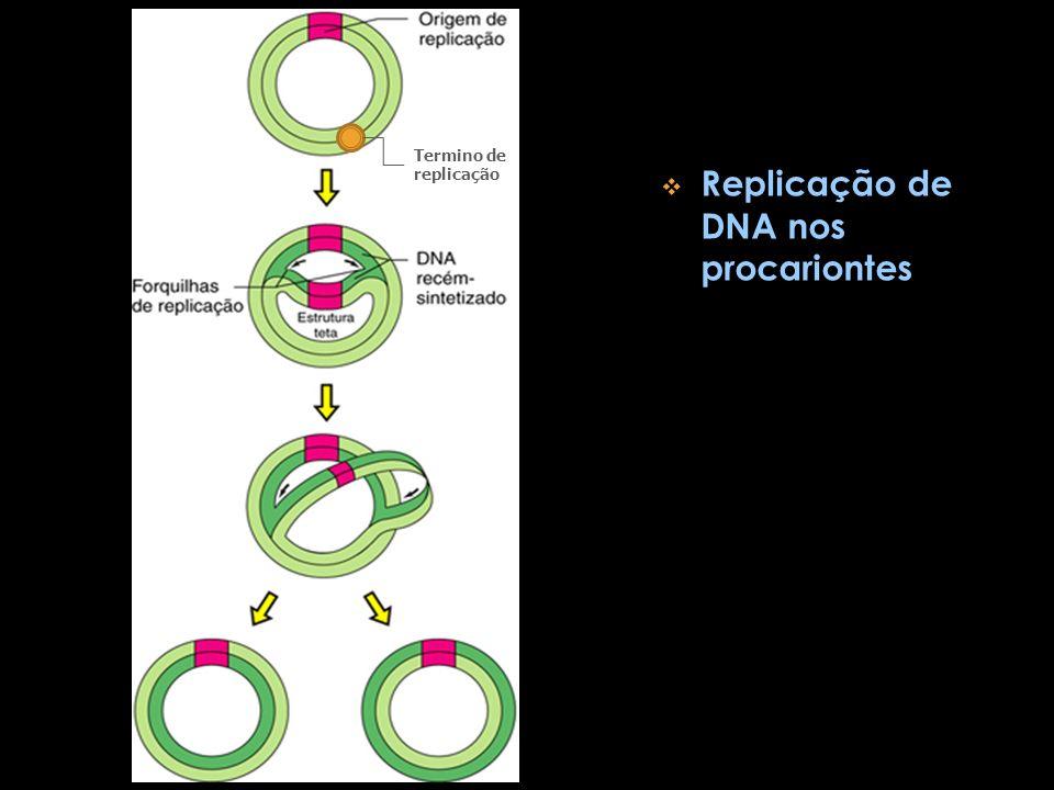 Replicação de DNA nos procariontes