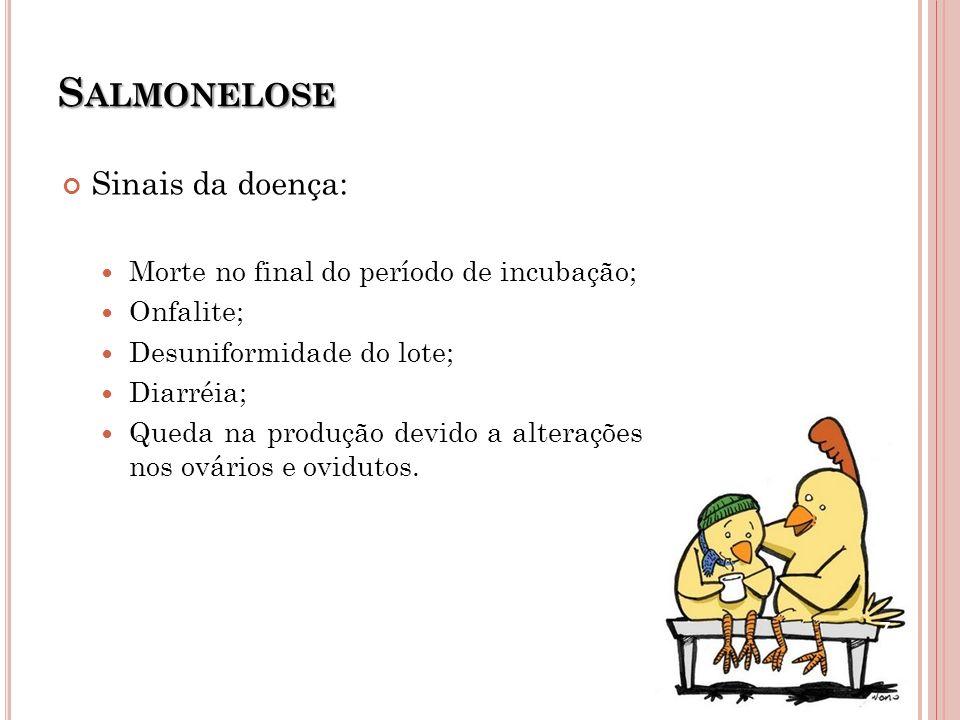Salmonelose Sinais da doença: Morte no final do período de incubação;