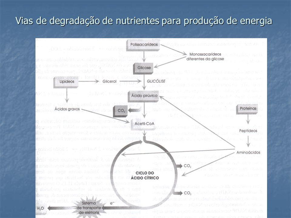 Vias de degradação de nutrientes para produção de energia