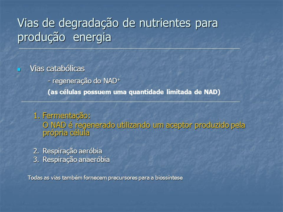 Vias de degradação de nutrientes para produção energia