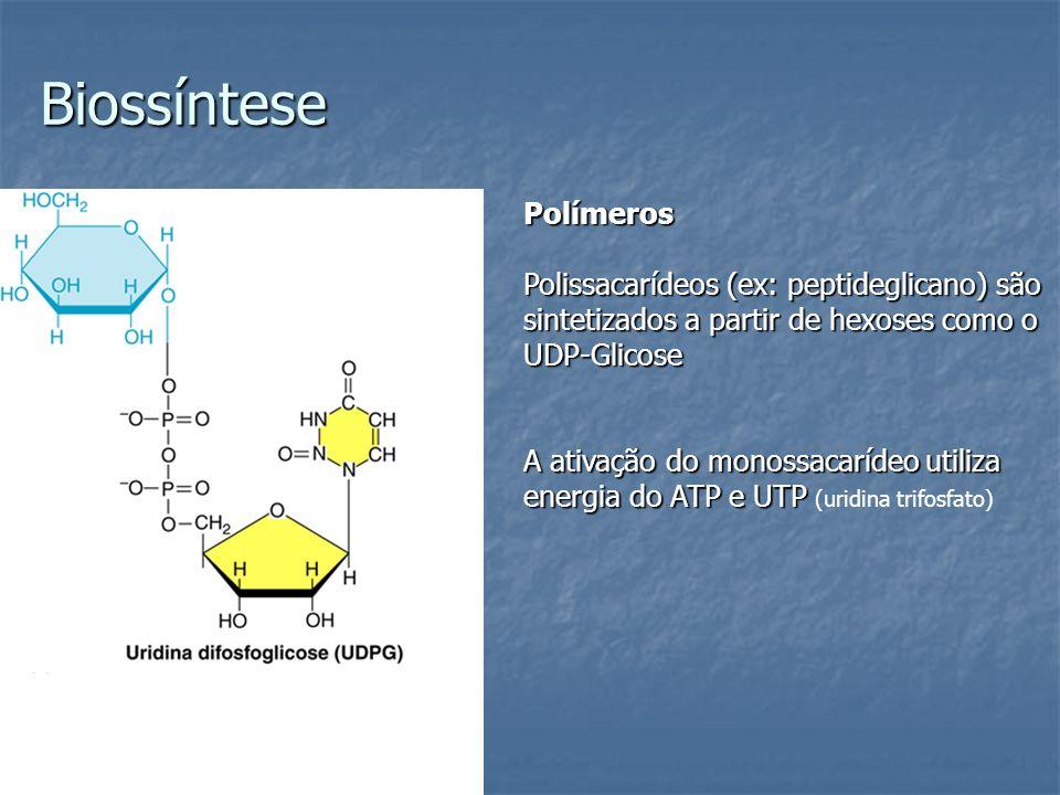 Biossíntese Polímeros