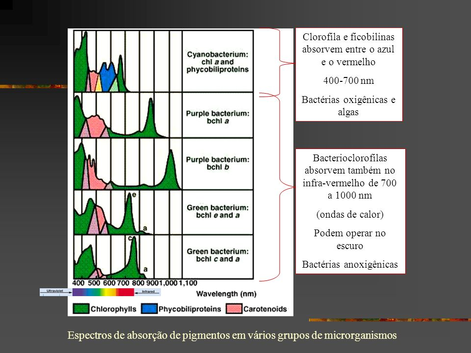 Espectros de absorção de pigmentos em vários grupos de microrganismos