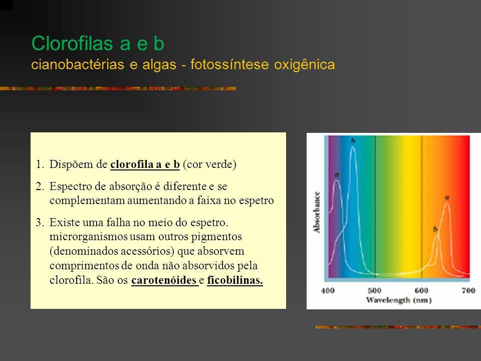 Clorofilas a e b cianobactérias e algas - fotossíntese oxigênica