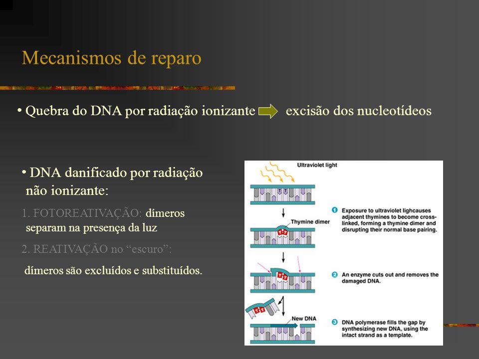 Mecanismos de reparo Quebra do DNA por radiação ionizante excisão dos nucleotídeos. DNA danificado por radiação não ionizante: