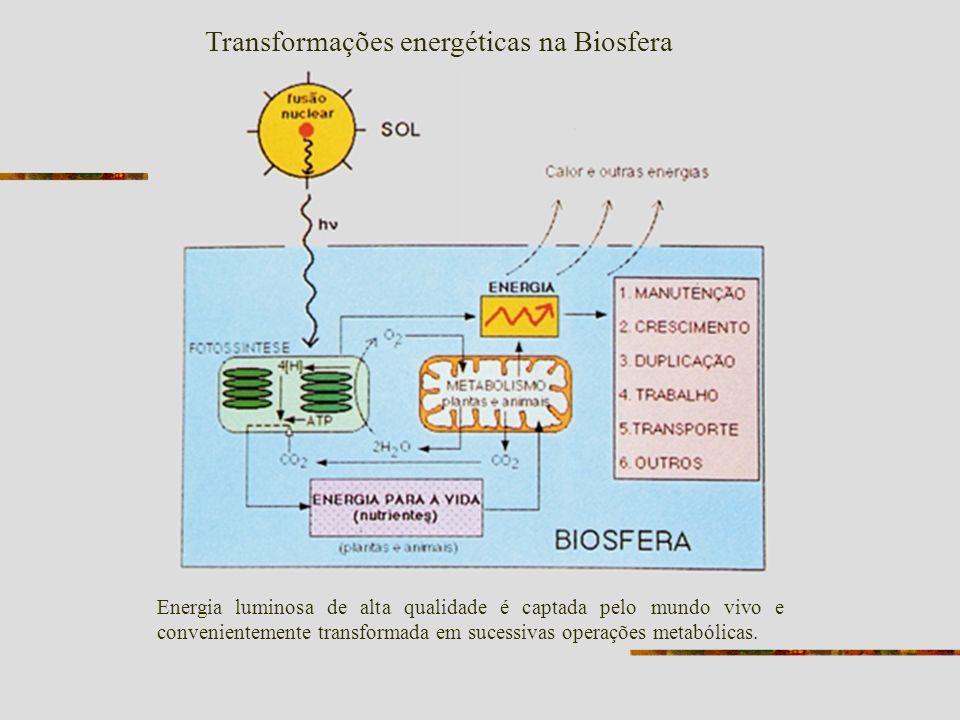 Transformações energéticas na Biosfera