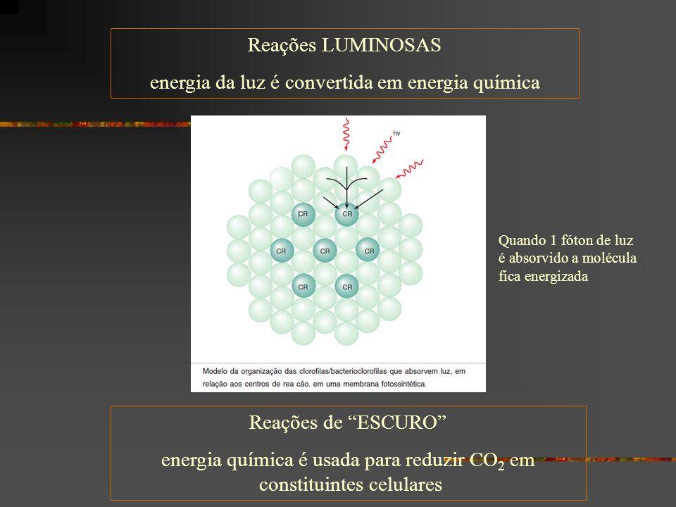 energia da luz é convertida em energia química