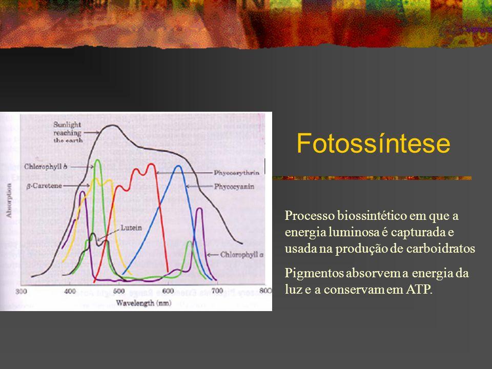 Fotossíntese Processo biossintético em que a energia luminosa é capturada e usada na produção de carboidratos.