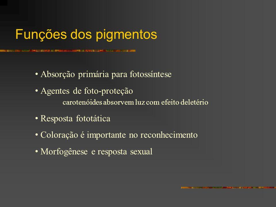 Funções dos pigmentos Absorção primária para fotossíntese