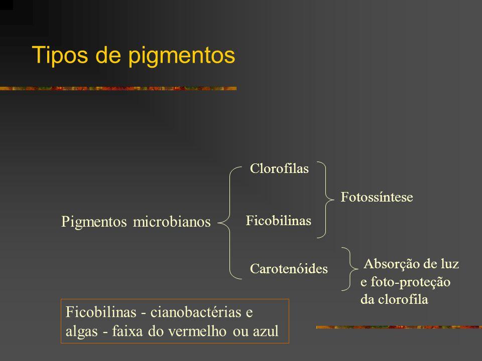 Tipos de pigmentos Pigmentos microbianos