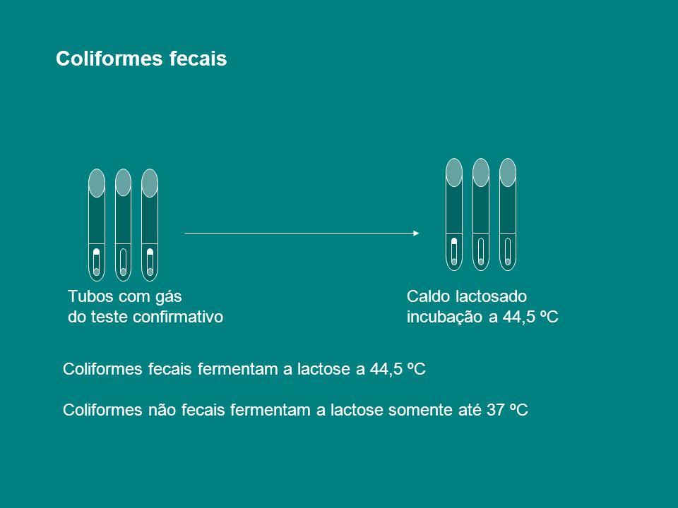 Coliformes fecais Tubos com gás Caldo lactosado