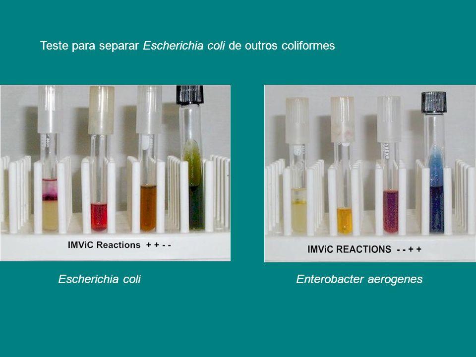 Teste para separar Escherichia coli de outros coliformes