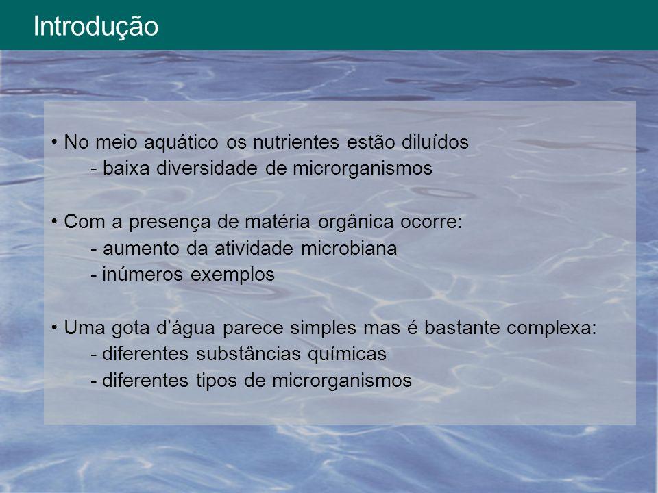 Introdução No meio aquático os nutrientes estão diluídos