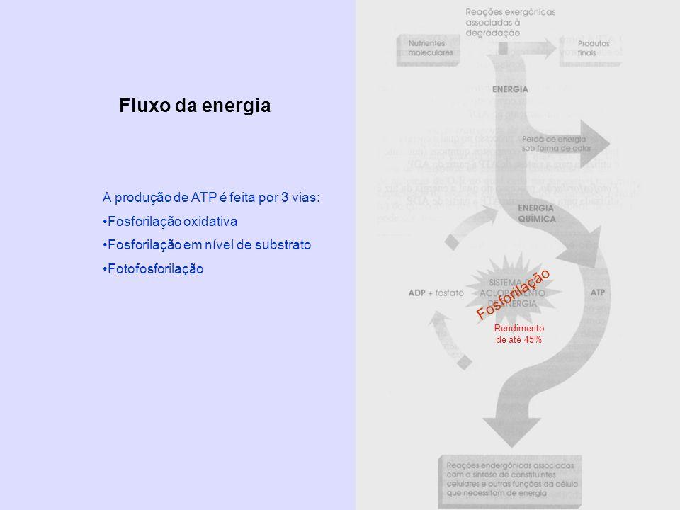 Fluxo da energia Fosforilação A produção de ATP é feita por 3 vias: