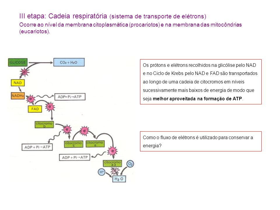 III etapa: Cadeia respiratória (sistema de transporte de elétrons)