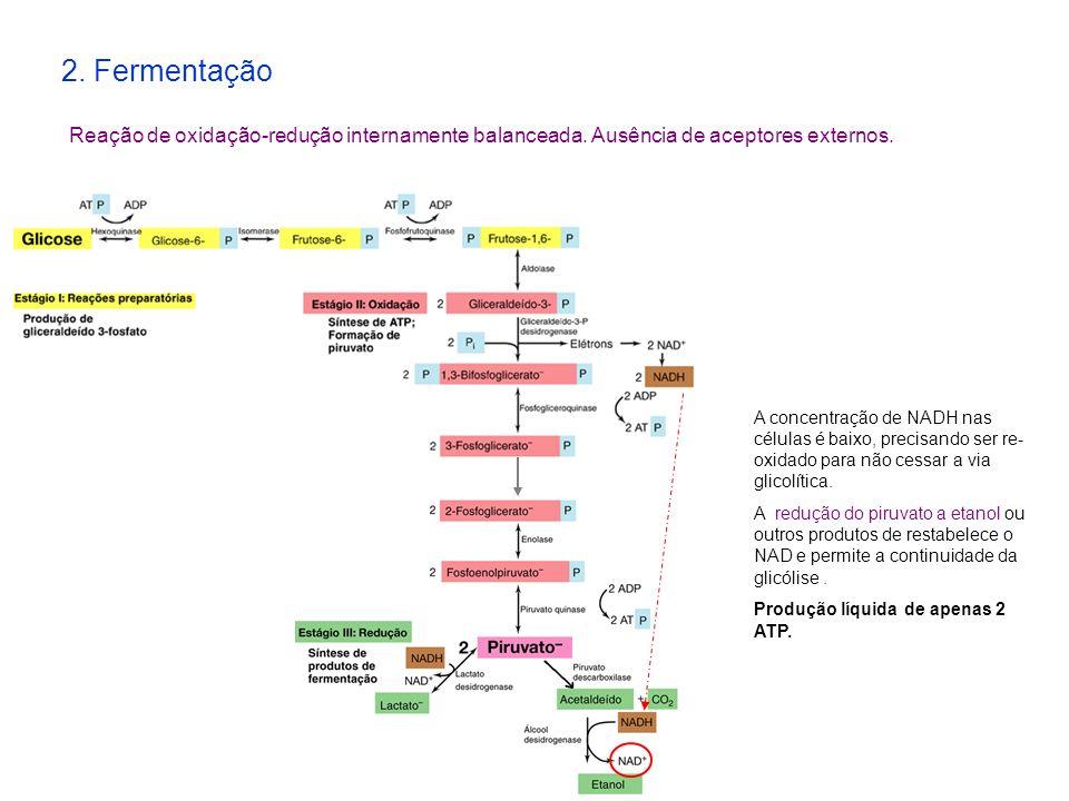 2. Fermentação Reação de oxidação-redução internamente balanceada. Ausência de aceptores externos.
