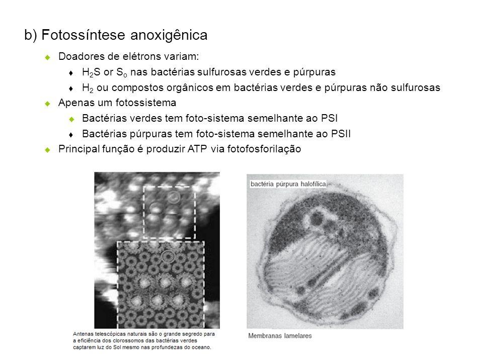 b) Fotossíntese anoxigênica